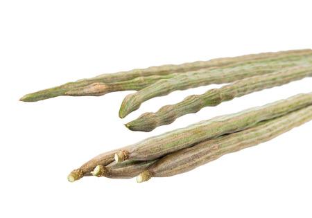 oleifera: moringa oleifera Lam or Bitter cucumber-chinese isolated on white