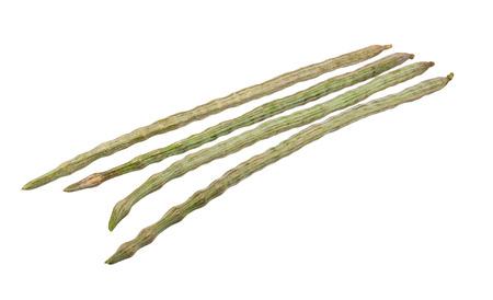 oleifera: Moringa oleifera Lam or Bitter cucumber-chinese isolated on white Stock Photo