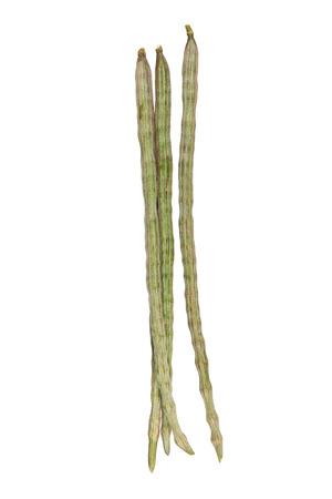 thiamine: moringa oleifera Lam or Bitter cucumber-chinese isolated on white