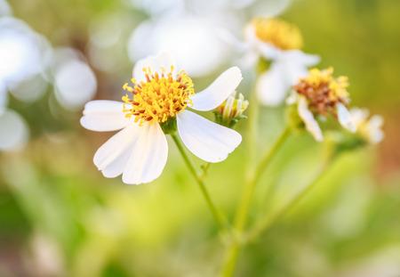 Weiße Blume Auf Grünem Hintergrund Lizenzfreie Fotos, Bilder Und ...