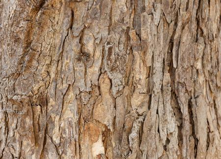 texture of wood bark Reklamní fotografie