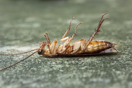 Dead cockroaches after got poison