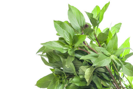 Bouquet of green basil leaf isolated on white