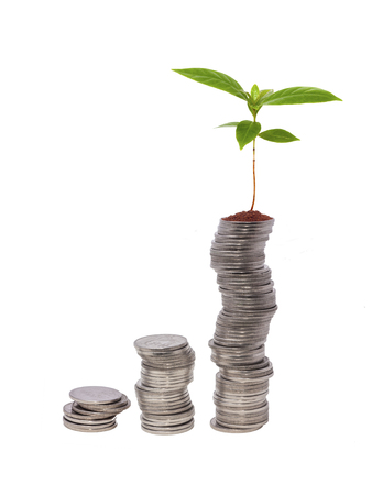 coffee sapling growth from stack of coin isolated on white
