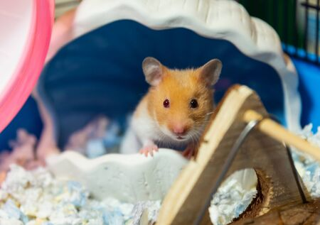 closed up of cute hamster