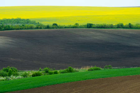 colza: Agricultural fields sown with colza, sunflower and wheat young.