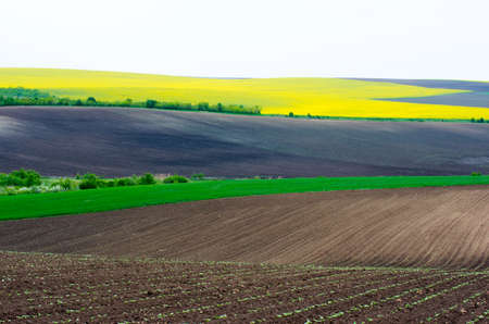 colza: Agricultural land with colza and young wheat and young sunflower.