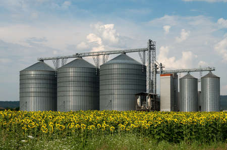 Silos of stainless metal storage of grain harvest. Field with sunflowers. Stock Photo