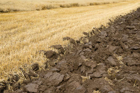 arando: Agricultural field in closeup. Plowing after harvest.