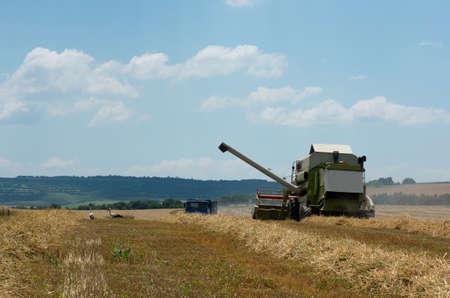 arando: Cosecha. La recolección del trigo con una cosechadora.