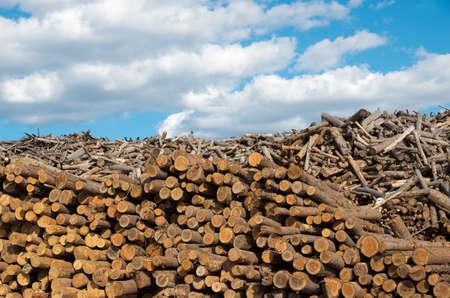 destructive: Logging. Industry destructive nature.