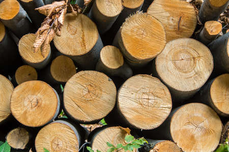 Pile Of Wood Logs Storage For Industry Stock Photo   87487450