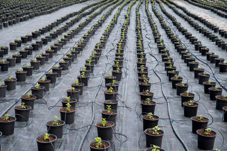 Plant nursery. Automatic plant watering system for greenhouse mist irrigation sys. Weed Control. 스톡 콘텐츠