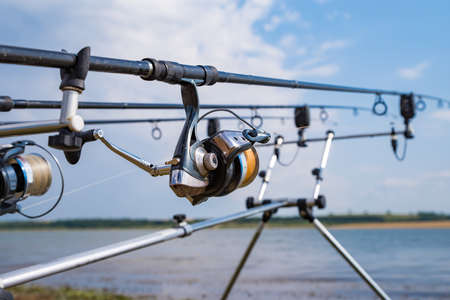 Carp fishing rods with reel set up on support system.