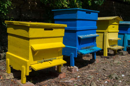 Bee hives in the garden. Beekeeping.