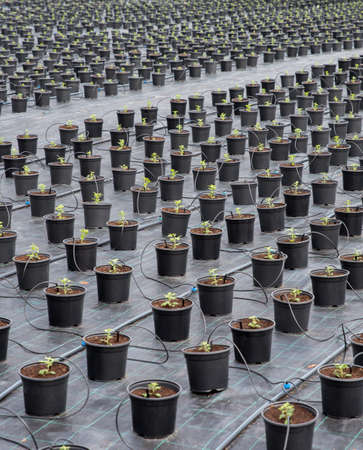 Automatic plant watering system for greenhouse mist irrigation sys. Weed barrier block landscape fabric. Plant nursery. 스톡 콘텐츠