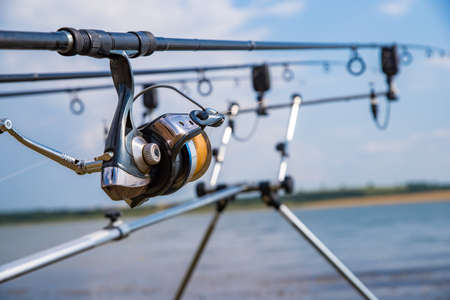 carp fishing rods and reel