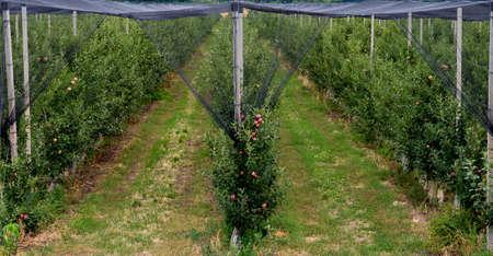 apple orchard in Bulgarian