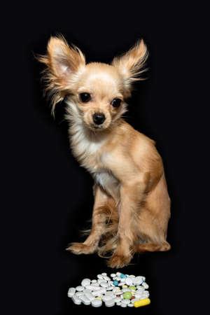 sick dog and veterinary drugs 免版税图像