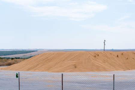 Large pile of wheat crop. Harvest 免版税图像