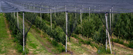 anti-hail net system fruit production