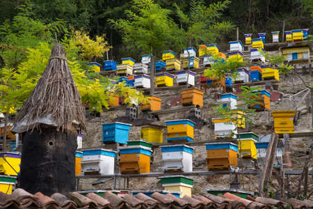Hives in apiary 免版税图像