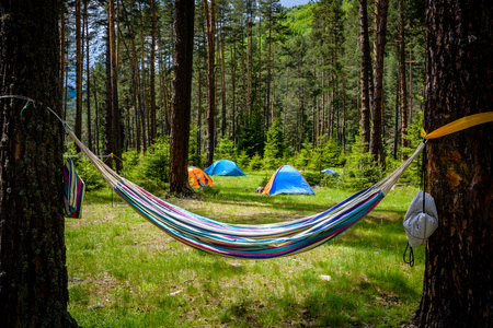 Hammock and colorful tents scattered in a pine forest in Bulgaria in portrait view