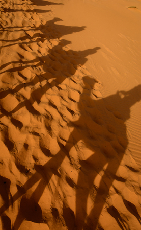 Shadows of camels in Erg Chebbi sand dune, Sahara, Merzouga, Morocco