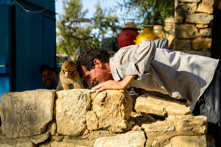MEKNES (VOLUBILIS), MOROCCO - October 20 2013: A Moroccan man is playing with a young Barbary Macaque (Macaca Sylvanus) outside the historical site of Volubilis near Meknes.