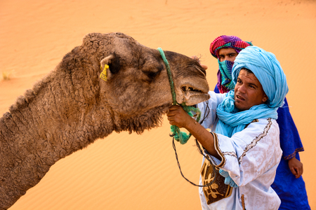 MERZOUGA, MOROCCO - OCTOBER 22 2013: Berbers trying to tie up an angry camel at a camp in Erg Chebbi. Erg Chebbi is one of Moroccos two Saharan ergs – large seas of dunes formed by wind-blown sand Editorial