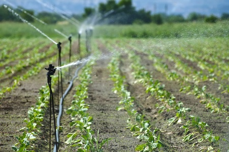 agricultural: Irrigation on Agricultural land