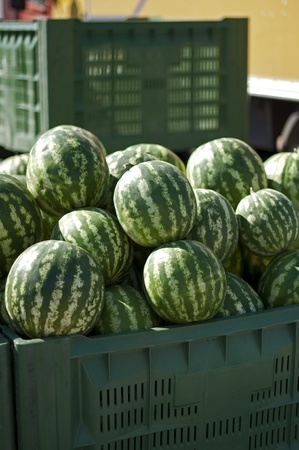 Watermelons in large crates in Wholesale market photo