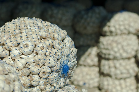 Mesh bag with garlic in Wholesale market photo