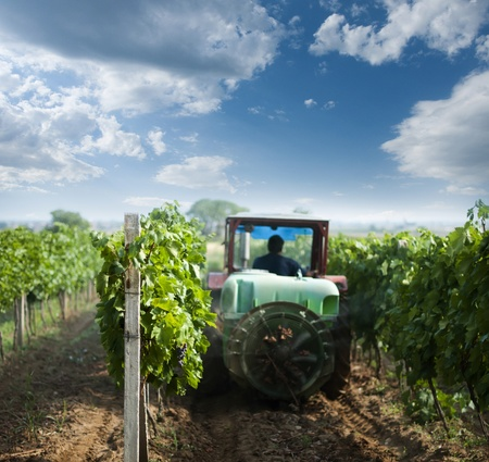 agriculture machinery: Tractor spraying vineyards with chemicals. Blue sky with clouds