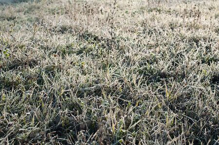 Grass with frost in winter. Meadow with rrost photo