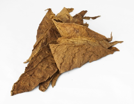 Dried tobacco leaves, fine details closeup photo