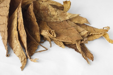 Las hojas secas de tabaco, primer plano los detalles finos