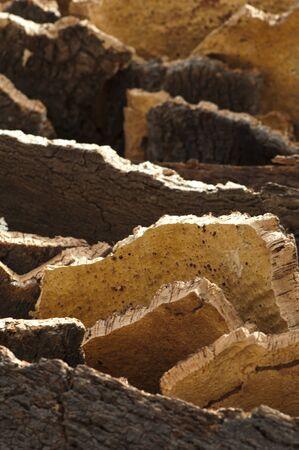 corkwood: Cork corteza. Pieza natural de la madera Foto de archivo