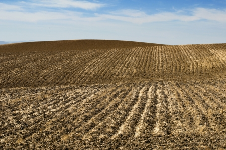 ploughed field: Agricultural land soil and blue sky .