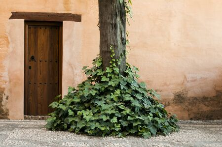 Wooden door and ivy around a tree photo