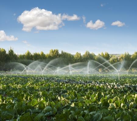 Bewässerungssysteme in einem grünen Gemüsegarten Lizenzfreie Bilder