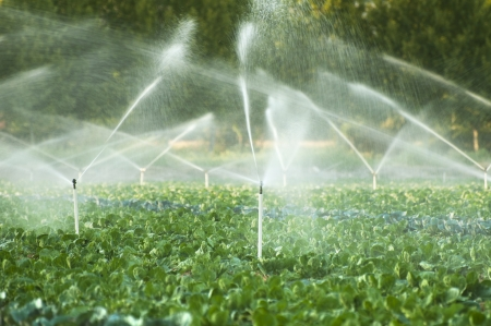 agricultural: Irrigation systems in a green vegetable garden Stock Photo