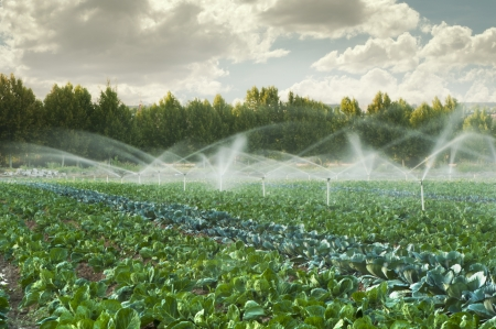 Irrigatiesystemen in een groene moestuin Stockfoto