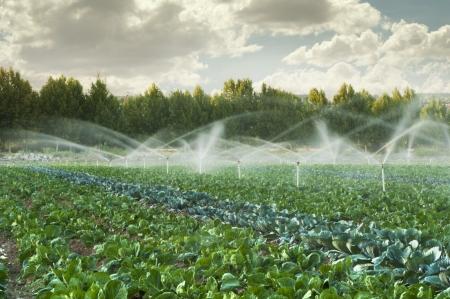 agricultura: Los sistemas de riego en un jard�n vegetal verde