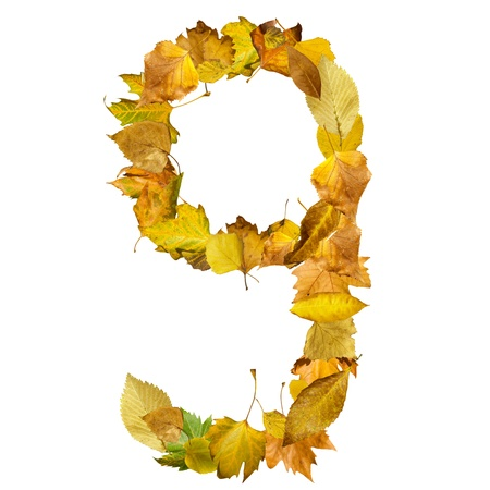 Number nine made of autumn leaves. White isolated photo