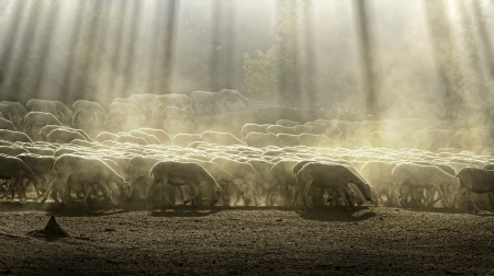 Kudde schapen in de forest.Pastel kleuren