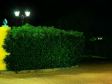 Night picture of the lamp in the park. Decorative garden in the night. photo