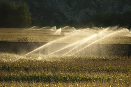 Irrigation systems on sunset. Corn plantation photo