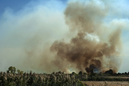 burning bush: Fire in a field and thick clouds of smoke in the sky.