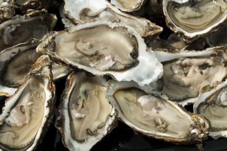Austern auf einem silbernen Tablett hautnah. Standard-Bild